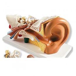 Simulador de Oído, 3 Veces su Tamaño Natural